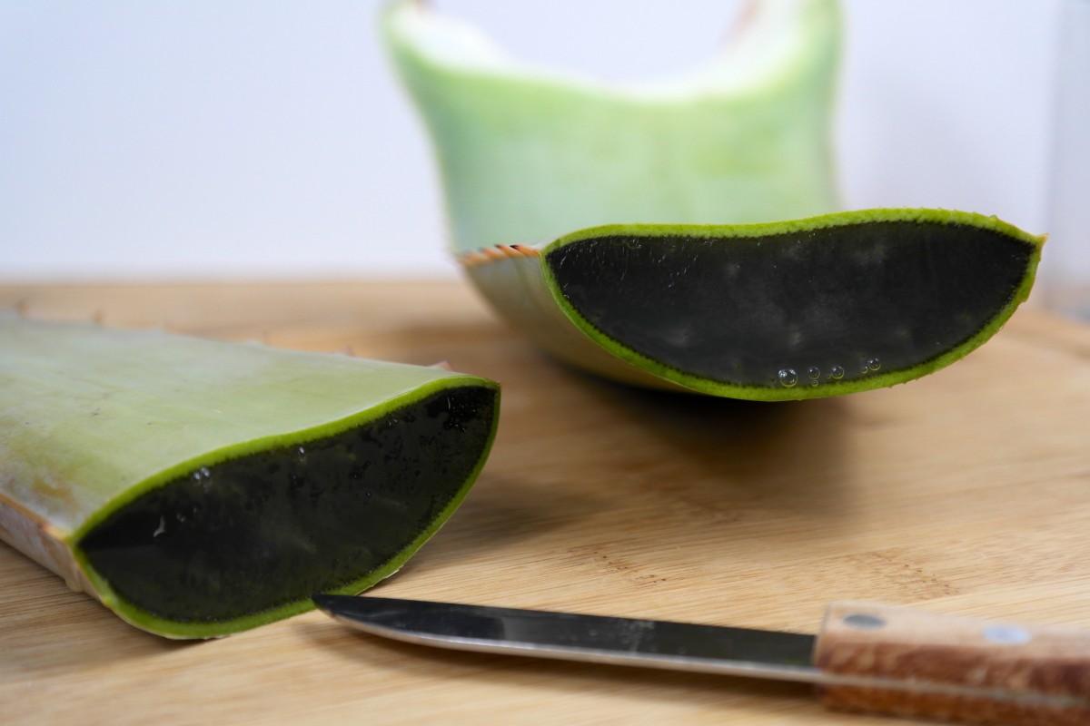 Allergie Planten Huid : Aloe vera monique van der vloed