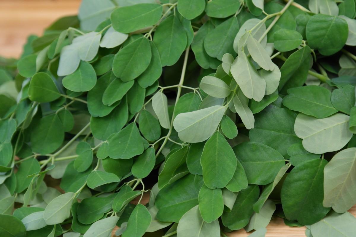 Moringa bladeren kopen