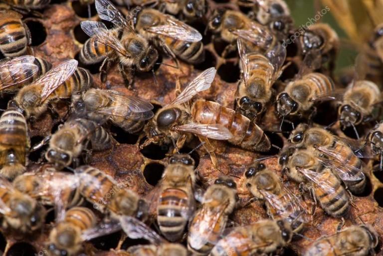 depositphotos_72674091-stock-photo-queen-bee-working-in-their
