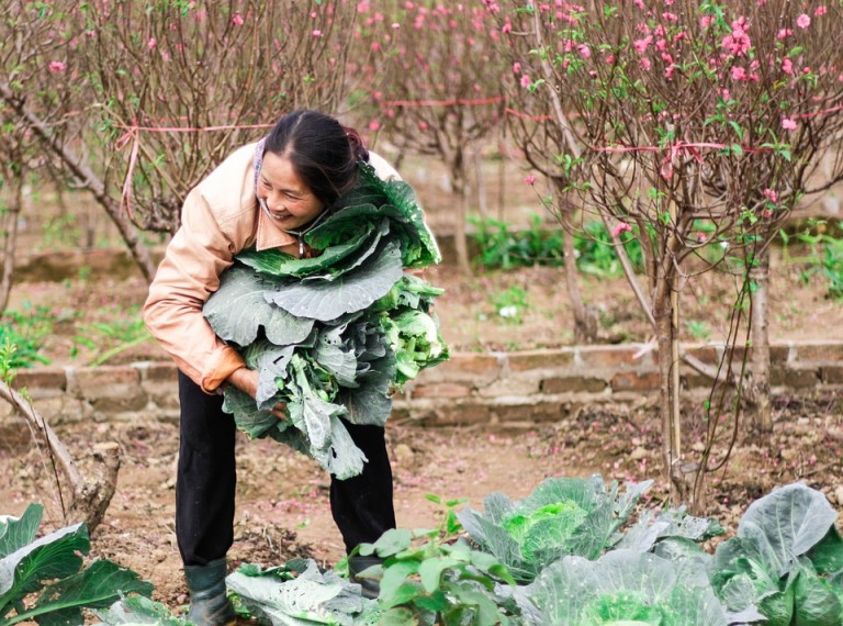 picking-vegetables-in-early-spring-2033587_960_720